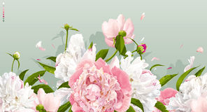 Pink and white peony background stock illustration