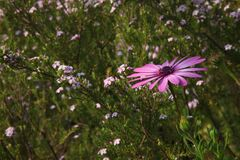 Pink and White Petaled Flower Stock Photos