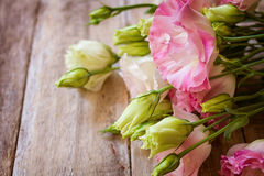 Pink and white ranunculus flowers Royalty Free Stock Photos