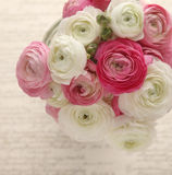 Pink and white ranunculus with script Stock Photo