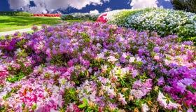 Azaleas in the Park Stock Photography