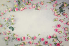 Pink and white rose flowers Royalty Free Stock Photo