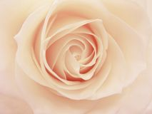 Pink and white rose heart closeup Royalty Free Stock Photos