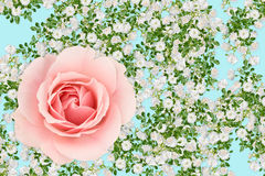 Pink and white rose montage Royalty Free Stock Images