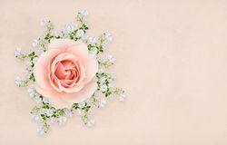 Pink and white roses arranged. Collage of pink and white roses with shadows, arranged on textured background Royalty Free Stock Image