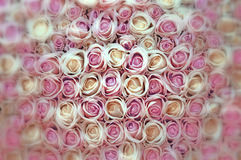 Pink and white roses as background Royalty Free Stock Photography