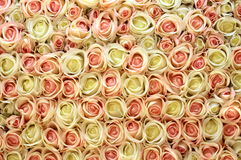 Pink and white roses background. Royalty Free Stock Photography
