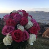 Pink and white roses. Bouquet of roses with ocean sunset and island in the background Stock Images