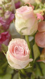 Pink and white roses - bunch of flowers Royalty Free Stock Images