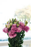 Pink and white roses bunch Set Stock Photography