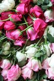 Pink and white roses. Bundle of Pink and white roses Stock Image
