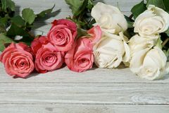 Pink and white Roses on a grey slate Stock Photo