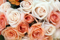Pink and white roses. Flowers background Stock Photos