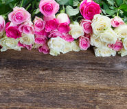 Pink and white  roses Stock Image