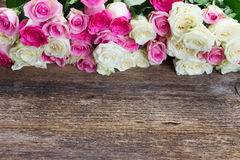 Pink and white  roses. Fresh pink  and white roses border on wooden table Stock Photos