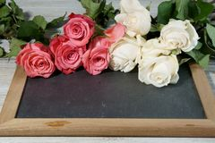 Pink and white Roses on a grey slate Royalty Free Stock Image