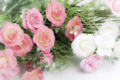 Pink and white roses Royalty Free Stock Photography