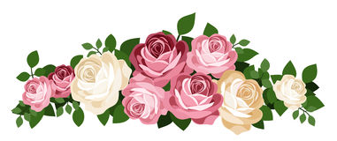 Pink and white roses. Vector illustration. royalty free illustration