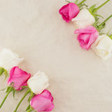 Pink and white roses on white muslin fabric Royalty Free Stock Image
