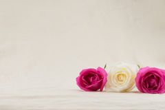 Pink and white roses on white muslin Royalty Free Stock Photography