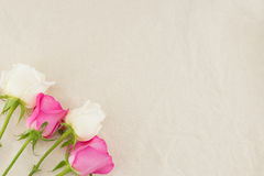 Pink and white roses on white muslin fabric Stock Image