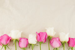 Pink and white roses on white muslin fabric Royalty Free Stock Images