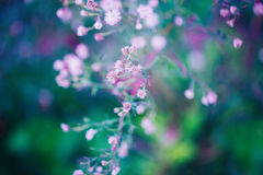 Pink white small flowers on colorful dreamy magic green blue purple blurry background, soft selective focus, macro. Beautiful fairy pink white small flowers on Royalty Free Stock Photography