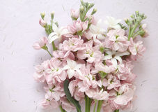 Pink stock and white hyacinth flowers Royalty Free Stock Photos