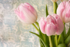 Pink and White Tulip Bouquet With Room For Text Royalty Free Stock Photos