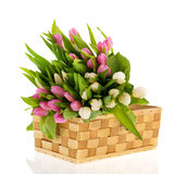Pink and white tulips in basket Stock Images