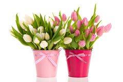 Pink and white tulips in buckets Stock Photos