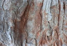 Pink with white veins red granite texture background.  Royalty Free Stock Image