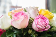 Pink, White and Yellow Flowers Royalty Free Stock Photography