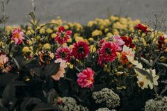 Pink, White, and Yellow Petaled Flowers royalty free stock photos