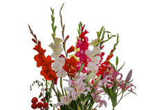 Pink white yellow red gladiolas and lily flowers Stock Image