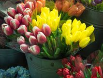 Pink and White and yellow Tulips at flower shop. In Chelsea Market in NYC Royalty Free Stock Photos