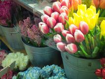 Pink and White and yellow Tulips at flower shop. With hydrangeas at Chelsea Market, NYC Stock Photography