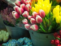 Pink and White and yellow Tulips in full bloom. At the Chelsea Market in NYC Stock Photography