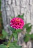 Pink wild flower Royalty Free Stock Photos