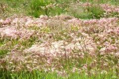 Pink Wild Flowers in Banff Stock Photos