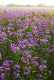 Pink wild flowers and forest Royalty Free Stock Photos