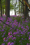 Pink wild flowers and forest Stock Images