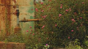 Pink Wild Flowers with Vintage Water Pipe Valve - Retro Wall Background stock image