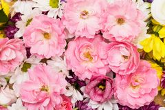 Pink wild roses Stock Images