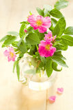 Pink wild roses Stock Photo