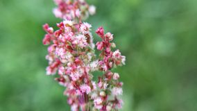 Pink wildflower. Beautiful knobby pink wildflower background stock images
