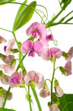 Pink wildflowers Royalty Free Stock Photography