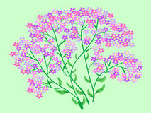 Pink wildflowers flowers bouquet Royalty Free Stock Image