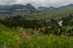 Pink Wildflowers in front of Woman Hiking royalty free stock photography