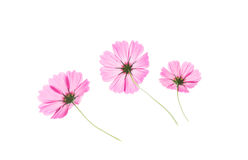 Pink wildflowers meadow on white background. Stock Image